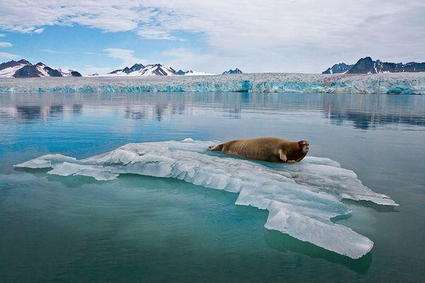 -melting-arctic-ice-full