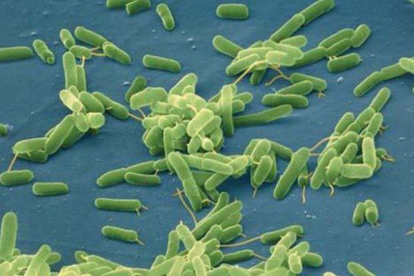 θανατηφόρα βακτήρια