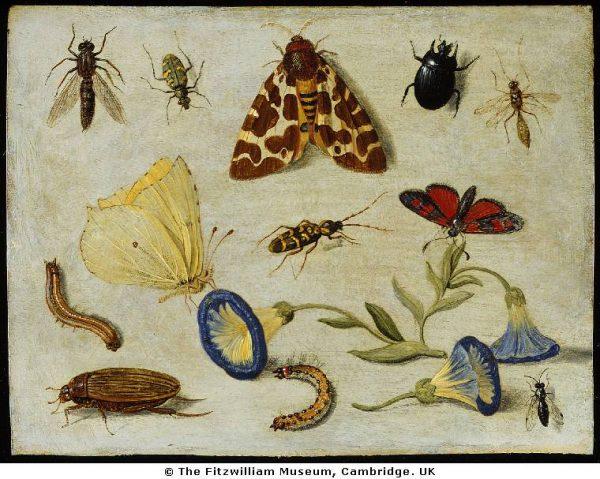 janvankessel_insects